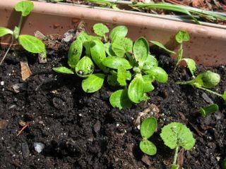 Gardening 005
