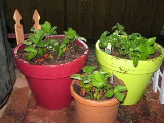 Gardening with Andrew 005