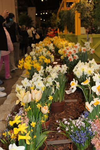 Flower Show 2010 146