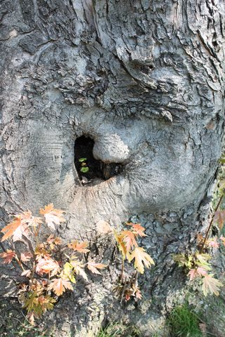 heart shaped hollow tree