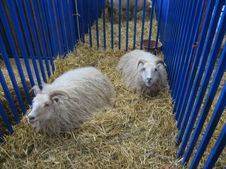 Maryland Sheep and Wool Festival 2010 014