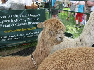 Maryland Sheep and Wool Festival 2010 039