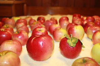 Solly Farms Apples 011