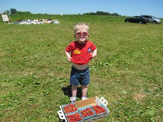 Strawberry fields 006