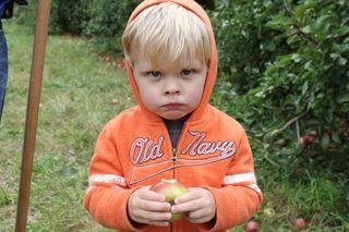Solly Farms Apples 011
