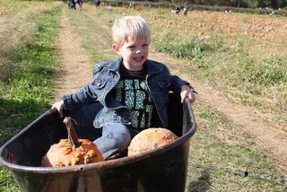 Pumpkins 098