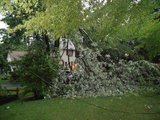 Fallen tree from storm 016
