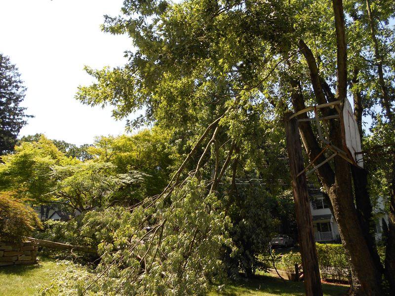 Fallen tree from storm 028