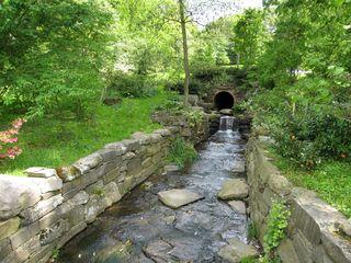 Morris Arboretum 034