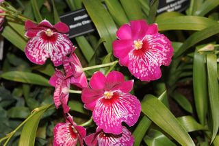 Flower Show 2012 158