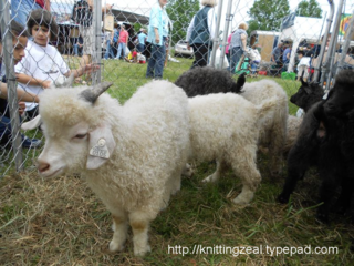 Sheep and wool 2012 002