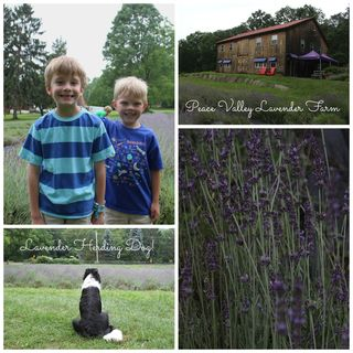 Lavender farm collage