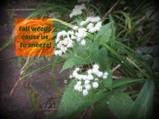 Claritin fall weeds